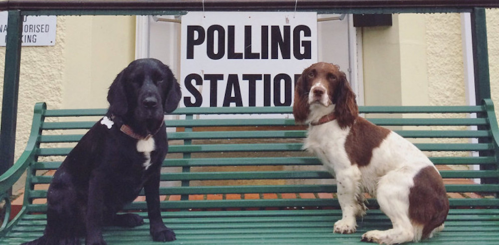 EU Referendum – Dogs At Polling Stations