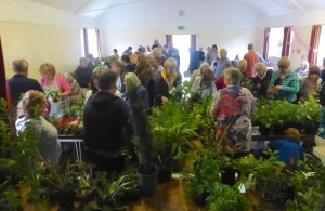 Goldhanger Plant Sale - May 2016